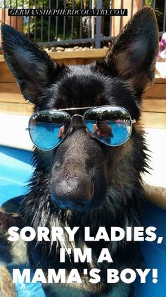 The German Shepherd (Diesel) Everything you want to know about GSDs. Health and beauty recommendations. Funny videos and more