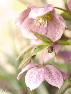 Roter Sonnenhut ? Anbau Und Pflege | September And Chang'e 3 Garten Im September Pflege Tipps