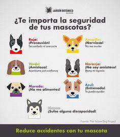 Mundo Animal, My Animal, Love Pet, I Love Dogs, Poodles, Cocker Spaniel, Animals And Pets, Cute Animals, Farm Animals