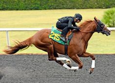 The Ocala Breeders' Sales Company's June Sale of in Training and Horses of Racing Age kicks off its four-day run Tuesday morning with bidding on the first of catalogued horses scheduled to … Derby Horse, 2 Year Olds, Sport Of Kings, Racehorse, Tuesday Morning, Horse Sculpture, Thoroughbred, Zebras, Horse Racing