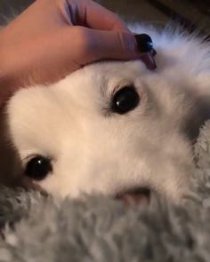 😻❤️❤️ - Hunde - Best Picture For pets unique For Your Taste You are looking for something, and it is going to tel - Cute Little Animals, Cute Funny Animals, Funny Dogs, Cute Dogs And Puppies, I Love Dogs, Doggies, Cute Fluffy Puppies, Puppies Puppies, Cute Animal Videos