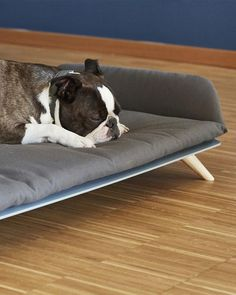 Letto Daybed hundeseng i eksklusivt design - Petlux Daybed, Boston Terrier, Pets, Animals, Design, Animals And Pets, Animales, Sofa Bed, Animaux