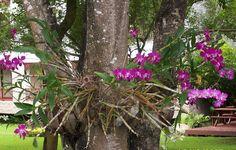 Cuál es el sustrato adecuado para cada tipo de orquídeas Tropical Flowers, Tropical Plants, Orchid Arrangements, Botany, Orchids, Cactus, Painting, Shiva, Outdoors