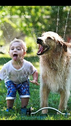 Golden Retriever Playing in sprinkler with his best bud
