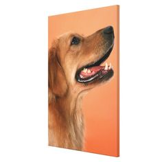 >>>Are you looking for          Golden Retriever 5 Stretched Canvas Print           Golden Retriever 5 Stretched Canvas Print We provide you all shopping site and all informations in our go to store link. You will see low prices onDiscount Deals          Golden Retriever 5 Stretched Canvas ...Cleck Hot Deals >>> http://www.zazzle.com/golden_retriever_5_stretched_canvas_print-192441833185120376?rf=238627982471231924&zbar=1&tc=terrest