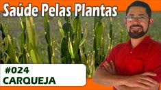 Saúde Pelas Plantas - Carqueja [fígado, vesícula, gastrite, anti-inflama...