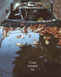 E Type Jag... Fall unknown.