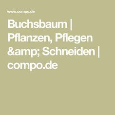 Buchsbaum | Pflanzen, Pflegen & Schneiden  | compo.de
