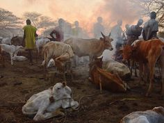 6 March 2015 Community members of the Nuer tribe stand among their cattle at a smoky traditional cattle camp at dawn at the town of Nyal, an administrative hub in Unity state, South Sudan TONY KARUMBA/AFP/Getty Images