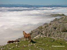 Sierra del Sueve: rutas senderismo Asturias [Más info] http://www.desdeasturias.com/la-sierra-del-sueve/