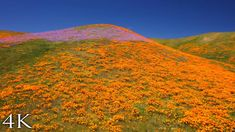 SUPERBLOOM SOARING [4K] 1HR Aerial Nature Relaxation™ Film + Soothing Hang Drum Vocal Music - YouTube California Usa, Drums, Music, Nature, Film, Youtube, Travel, Musica, Movie