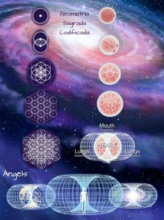 Flor da Vida The Sacred Geometry of Human Cell Growth - Vesica Piscis, Egg of Life, Flower of Life, Egg Of Life, Sacred Geometry Symbols, Meditation, Spirit Science, Flower Of Life, Tarot, Healing, Crystals, Angels