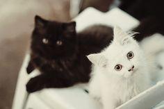 so many black and white kittens