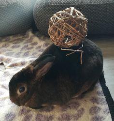 Bunnyball - Ballbunny