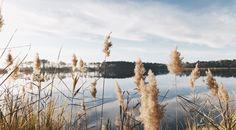 phlebotomy in delaware Lake Pictures, Lake Photos, Environmental Aesthetics, World Wetlands Day, Candidly Keri, Of Wallpaper, Ocean Wallpaper, Beautiful World, Travel Usa