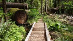 things-to-do-in-mount-rainier-national-park-that-arent-hiking-mount-rainier