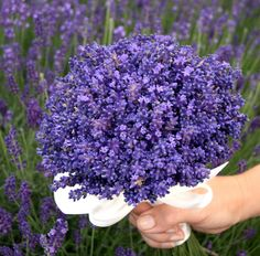 Bouquet of Lavender. Lavender Cottage, French Lavender, Lavender Fields, Lavender Color, Lavender Bouquet, Lavender Flowers, Purple Flowers, Beautiful Flowers, Lavender Ideas