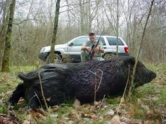 My Hunting Spot: Texas Pig Hunt 2004 - They grow 'em big in Texas
