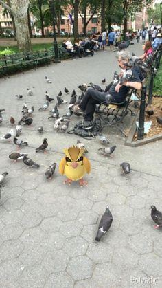Just found the master Pidgey trainer in Washington Square Park NYC! #PokemonGo