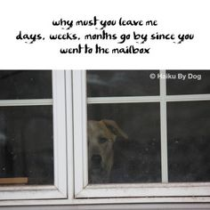 why must you leave me days, weeks, months go by since you went to the mailbox  #HaikuByDog