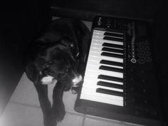 Piano playing PitBull