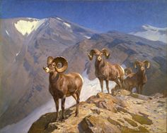 The Mountaineers—Big Horn Sheep on Wilcox Pass by Carl Rungius. Treasure from Our West from the Whitney Western Art Museum, Buffalo Bill Center of the West. Sheep Paintings, Wildlife Paintings, Great Paintings, Wildlife Art, Animal Paintings, Wild Life, Big Horn Sheep, Sheep Art, Hunting Art