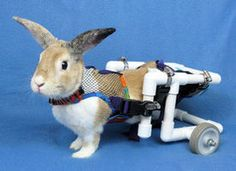 Wheelchairs and the Disabled Rabbit