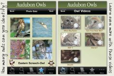 Audubon Owls - Discover the Owls In Your Neighborhood