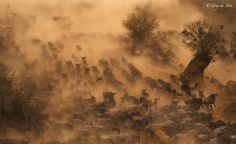 Photo Implausibilty of Wildebeest by greg du toit on 500px