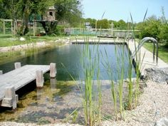 """How amazing!!! Your very own swimming hole. """"Natural"""" Swimming pools?! Love the look and concept. Would love to look in to it more... Sanitation? Upkeep?"""