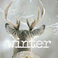 I am missing winter .I feel the least anxious and stress in the winter. I Love Winter, Winter Day, Winter Is Coming, Winter Snow, Winter White, Winter Season, Winter Holidays, Winter Christmas, Xmas