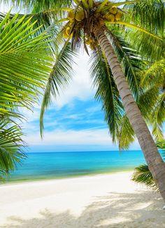 Art fabric photography backdrops Beach photo studio photographic background for children Hawaii coconut tree backdrop Strand Wallpaper, Ocean Wallpaper, Summer Wallpaper, Wallpaper Desktop, Tree Photography, Photography Backdrops, Fabric Photography, Party Photography, Beach Backdrop