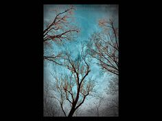 Teal Home Decor - Landscape Photograph, Tree, Forest - Three Trees Wall Art Color - Teal and Red Art Art Print Title: The Spirit of Trees Tree Wall Art, Wall Art Decor, Teal Home Decor, Red Art, Tree Forest, Landscape Photographers, Original Image, Great Photos, Amazing Art