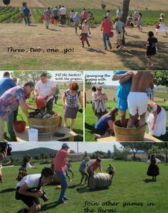 Wine activities in Tuscany: harvest and games