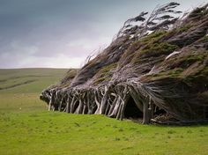 The next time you want to complain about the wind messing up your hair, just consider the trees of Slope Point, which have been permanently twisted and windblown by intense Antarctic gusts.