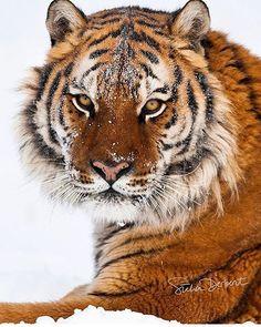 Photo by @suhaderbent  #wildlifeowners