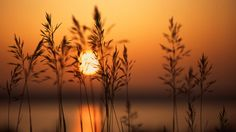 Sunset and dry herbs (1920x1080, dry, herbs)  via www.allwallpaper.in