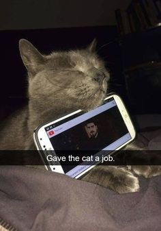 tk cats who deserve their own snapchat accounts 24 39 Cats Who Deserve Their Own Snapchat Accounts