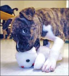 Great article: How to Train Your Puppy Not to Bite onhttp://www.whole-dog-journal.com/issues/15_3/features/Training-Puppies-Not-To-Bite_20482-1.html