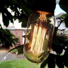 Edison filament bulb hung in tree as part of a 15 light festoon set