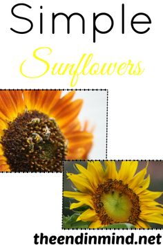 Simple Sunflowers - By Tricia Hodges