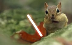 In a Land Far, Far Away… Jedi Squirrels With Lightsabers!  In a land far, far away, there was once a group of squirrels who chose to be different. Rather than fighting for nuts with their little cute squirrel hands, they decided to use the ultimate weapon: a lightsaber! Yes, Jedi squirrels with lightsabers really do exist, and we have video proof below! Check out these awesome Star Wars inspired squirrels below!