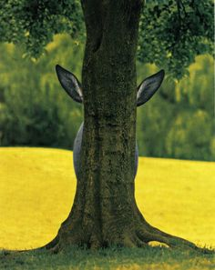 Donkey behind a tree...No See... | Silly Donkey