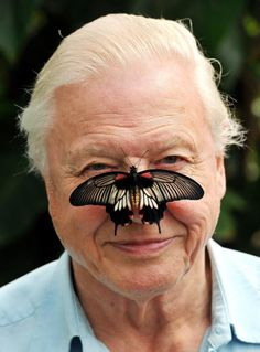 I would love to meet Sir David Attenborough. Just once. Just to shake his hand. He's just a phenomenal person.