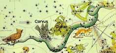 Hydra_corvus_crater. Folklore involving ravens and crows has intermingled over time. The word 'crow' might relate to a different constellation.