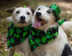 Show your support for Georgia Jack Russell Rescue, Adoption & Sanctuary by voting for Elanor and Eli in the For the Love of Dogs Calendar Contest
