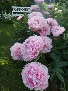 pioni Colonial Garden, Scandinavian Garden, Growing Peonies, Seed Packaging, Flower Garden Design, Flower Bird, Green Life, Interior Exterior, Garden Inspiration