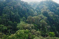 Mathias, récemment revenu de 3 semaines à Sumatra nous livre ici ses conseils pour découvrir l'une des plus belles îles d'Indonésie. Entre rencontres insolites et paysages sauvages, un voyage sur cette île ne vous laissera pas indifférent. River, Outdoor, Savages, Tips, Travel, Outdoors, Outdoor Games, The Great Outdoors, Rivers