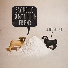 'Say Hello to My Little Friend'