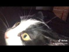 KITTENS - YouTube Kittens, Cats, Action, Youtube, Cute Kittens, Gatos, Group Action, Kitty Cats, Baby Cats